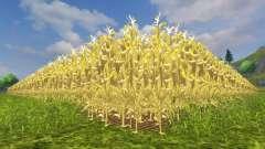 L'augmentation du rendement de maïs