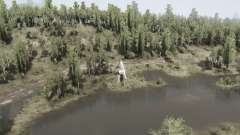 Forêt de feuillus