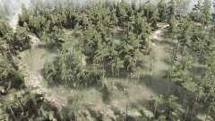 Forêt marécageuse