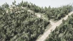 L'évolution de la forêt